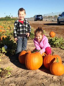 Pumpkin Patch pic 1